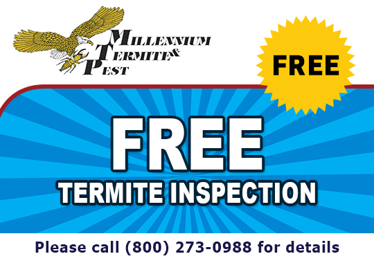 Free Termite Inspection - Call For Details