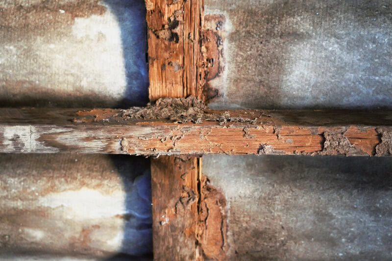 House Construction with Termite Damage